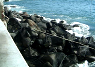 海岸護岸根固め工